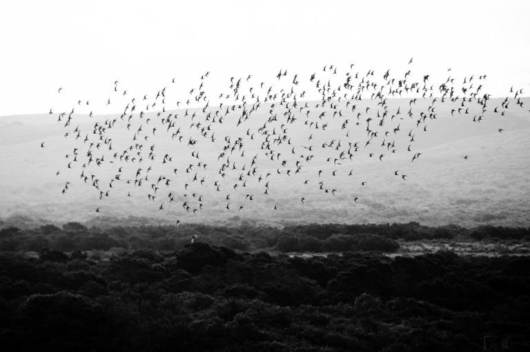 bird-290744_1280