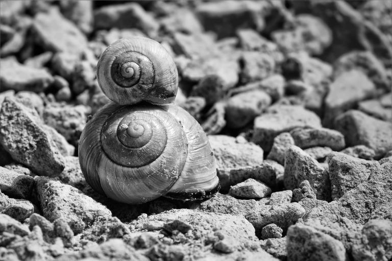 snails-700868_1280