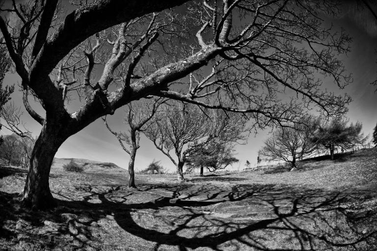 trees_and_shadows